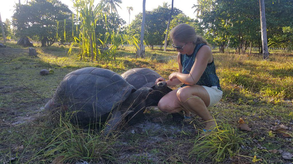 Begegnung mit zwei Aldabra-Schildkröten